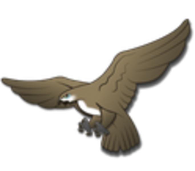 Hostel Hawk
